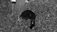 Varşova'da nesli tükenmekte olan fare geyiğinin doğum anı ilk kez görüntülendi