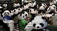 Karantina kurallarını böyle protesto etti: Restoranında pandaları ağırladı!