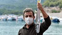 Balon balığının kuyruğunu getirene para verilecek: Ek gelir olacak