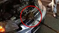 Bartın'da otomobilin motoruna giren tilkiyi itfaiye ekipleri kurtardı