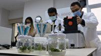 Türk bilim insanları geleceğe umut olacak: Kuraklık karşı dayanıklı bitkiler ıslah edecekler