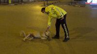 Bursa'da gülümseten görüntü: Köpeğin başına bir şey gelmesin diye dakikalarca yoldan kaldırmaya uğraştı