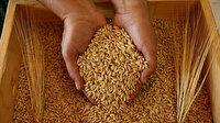 Çok sayıda tahıl ürününde gümrük vergisi sıfırlandı