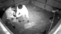 Tavuk hırsızları girdikleri kümeste hayvanları çuvala doldurup kaçtı