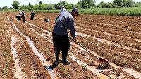 Antalya'da afetten zarar gören çiftçiler için 10 milyon lira ödenek ayrıldı