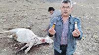 Amasya'da isyan ettiren olay: Biri gebe iki atı öldürdüler
