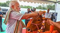 """Hindistan en kutsalı """"inek"""" hakkında ulusal sınav yapacak"""