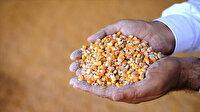 Hububat ve bakliyat sektöründe rekor ihracat