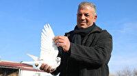 Müdürlüğü bırakıp güvercin beslemeye başladı: 100 bin liraya bile satmıyor