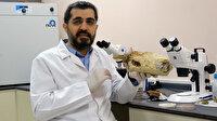 'Ölümsüzlük mantarı' Türkiye'de üretildi: Fiyatı dudak uçuklatıyor