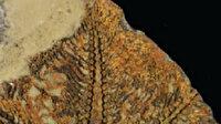 Fas'ta dünyanın bilinen en eski denizyıldızı keşfedildi