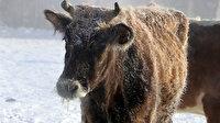 Doğu Anadolu'da 325 köye ulaşım kapandı: Hayvanlar bile buz tuttu