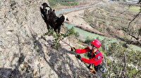 Uçurum kenarında mahsur kalan keçiler için jandarma harekete geçti