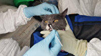 Bilim insanlarından koronavirüs uyarısı: Evcil hayvanlar da aşılanmalı