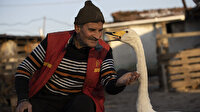 Mektup götürdüğü köyde bulmuştu: Kuğu ile postacının dostluğu 37 yıldır sürüyor