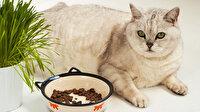 İndirimli Kedi Maması ve Kedi Ürünleri - Zoo.com.tr 'de