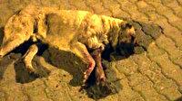 Sokak köpeğinin gözlerini oyup sopayla öldüresiye dövdüler