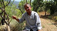 Yakınlarının kayıp ihbarı yaptığı adam zeytin ağacında asılı halde bulundu