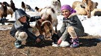 Biri 8 yaşında biri 10: 2 bin 650 rakımlı yaylada yüzlerce hayvana çobanlık yapıyorlar