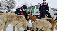 Jandarma ekipleri sokak hayvanlarını unutmadı: Elleriyle beslediler