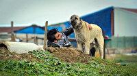 Küçük kardeşini bataklıktan kurtaran köpeğinin mezarını her gün ziyaret ediyor