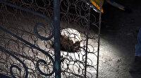 Antalya'da temizlik yaparken insan kafatası buldu