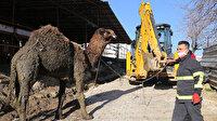 Hatay'da su kanalına düşen deveyi itfaiye ekipleri kurtardı