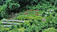 Türkiye'nin 'Bal ormanları': Yıllık 200 milyon lira katkı sağlıyor
