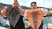 İki girişimci, zehirli balon balığını deri sektöründe kullanmaya hazırlanıyor