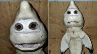 İnsan yüzüne benzeyen yavru köpek balığı bulundu