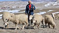 Avukatlığı bıraktı çobanlığı tercih etti: İnsan bir işi severek yapmalı
