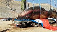 Çin'de 18 metrelik ölü ispermeçet balinası kıyıya vurdu