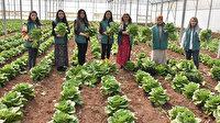 Tarım eğitimi alan yedi kadın kurdukları kooperatifle ihracata başladı