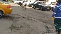 Rize'de köpek, temizlik işçisinin süpürgesini kaçırdı