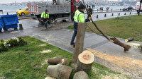 Üsküdar'da gece yarısı ağaç kesenlere suçüstü: Ekipler temizlik çalışması yaptı