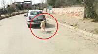 Aydın'da tepki çeken görüntü: Köpeği aracın arkasına bağlayıp sürükledi