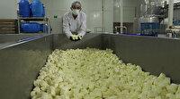 Türkiye'de ilk: Koronaya karşı probiyotik peynir ürettiler
