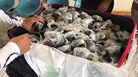 Valizin içinden çıkanlar şoke etti: Tam 185 tane plastiğe sarmışlar