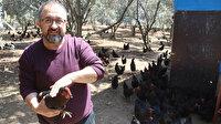 Hobi olarak başladı: Şimdi günde 600 yumurta üretiyor