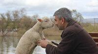 Bir an bile yanından ayrılmıyor: İmamla kuzunun sevimli dostluğu