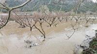 Bilecik'te sağanak yağış Göksu Nehri'ni taşırdı: Tarım arazisi sular altında kaldı