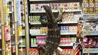 Tayland'da markete giren dev kertenkele paniğe neden oldu