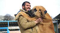 Hobisini işe dönüştüren vatandaş insan boyunda çoban köpekleriyle çiftlik kurdu: 50 bin TL'ye satmadı