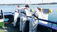 Karadeniz'de büyük tehlike: 12 balık türünde mikroplastik görüldü