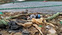 İzmir'de çevre katliamı: Yasal olmayan yollarla oluşan kirlilik balık türlerini azaltıyor
