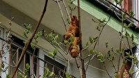 Apartmana korku salmış ve hayvan sanılmıştı: Kruvasan çıktı