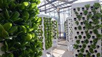 Topraksız tarımda dikey sistem: 13 kat daha bitki elde edilebiliyor
