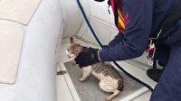 Beylerbeyi'nde Sahil Güvenlik ekiplerinin kedi kurtarma operasyonu kamerada