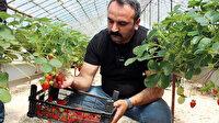 Topraksız üretiliyor: Yılda 300 bin lira kazanıyor