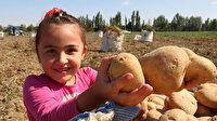 Cumhurbaşkanı Erdoğan'ın talimatıyla dağıtılan patates soğan en çok üreticileri mutlu etti